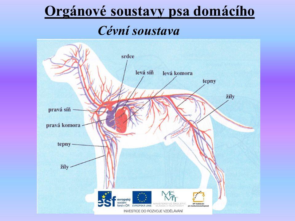 Orgánové soustavy psa domácího