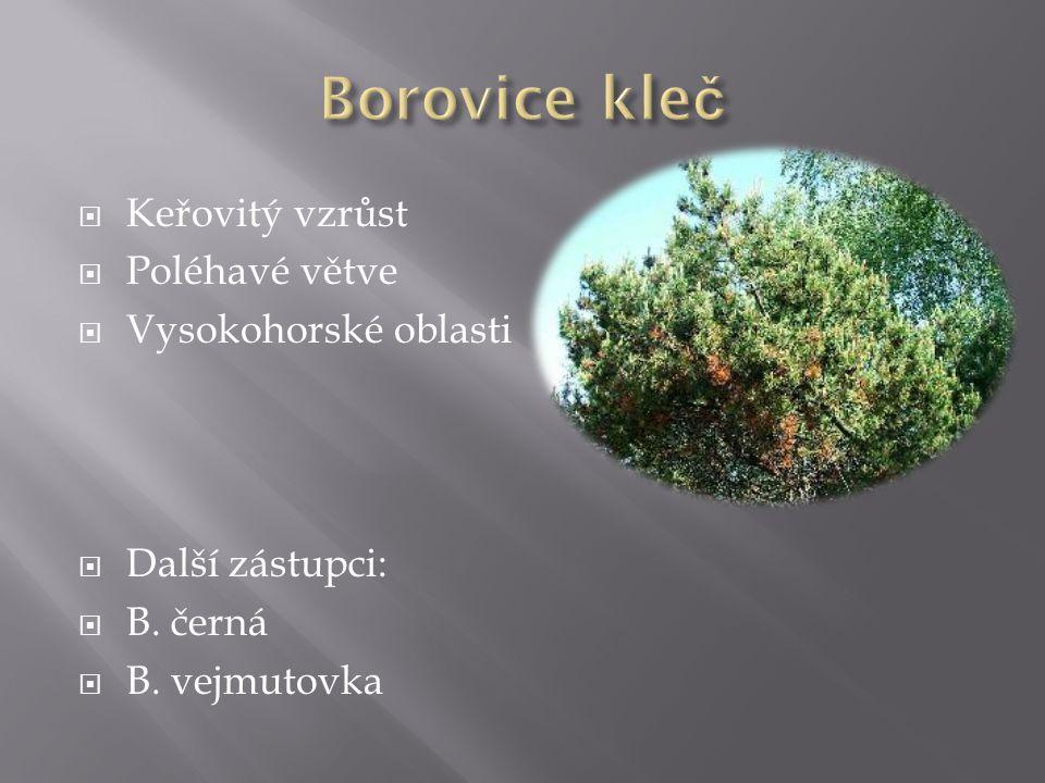 Borovice kleč Keřovitý vzrůst Poléhavé větve Vysokohorské oblasti