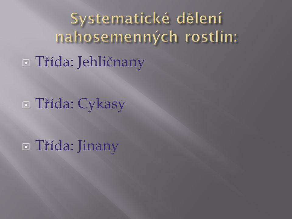 Systematické dělení nahosemenných rostlin: