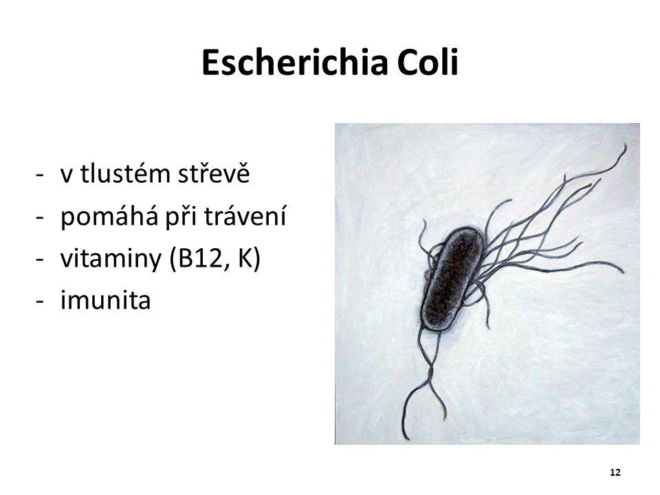 Escherichia Coli v tlustém střevě pomáhá při trávení vitaminy (B12, K)