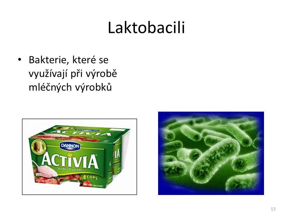 Laktobacili Bakterie, které se využívají při výrobě mléčných výrobků