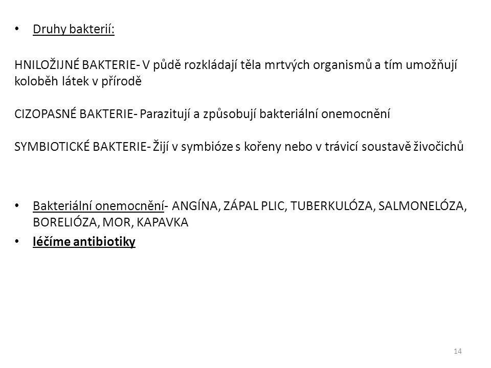Druhy bakterií: