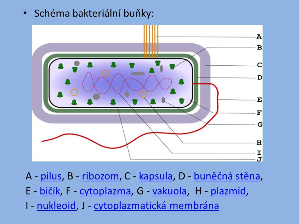 Schéma bakteriální buňky: