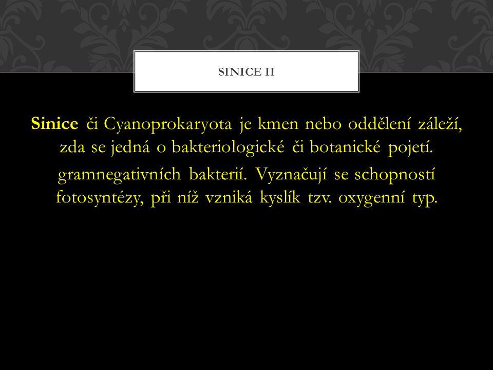 Sinice II