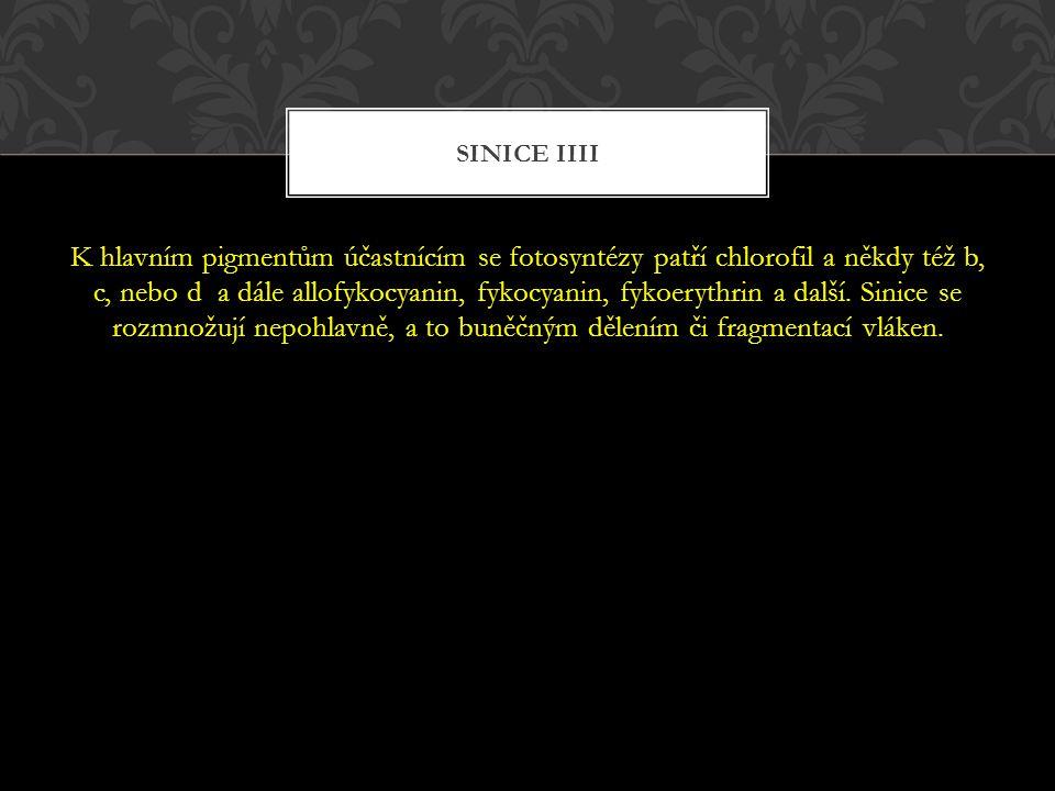 Sinice IIII