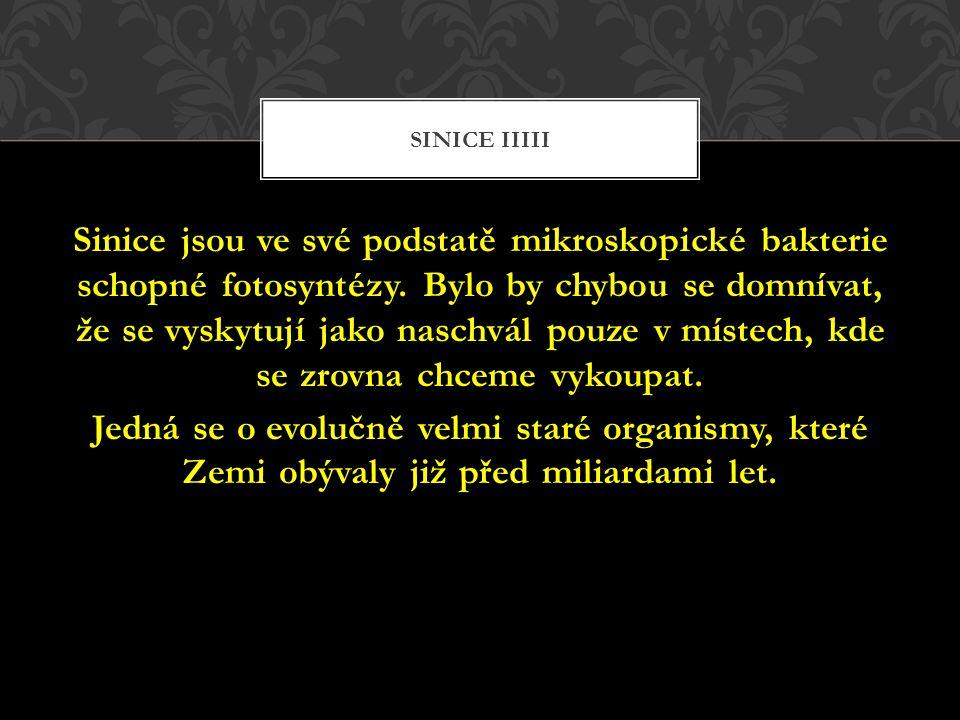 Sinice IIIII