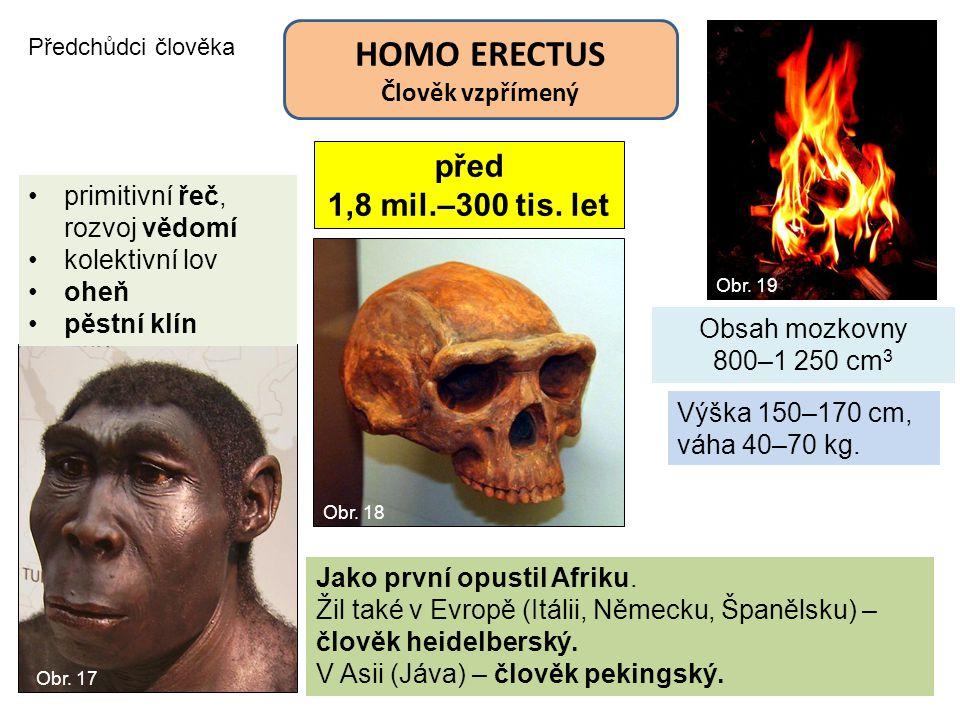 HOMO ERECTUS před 1,8 mil.–300 tis. let Člověk vzpřímený