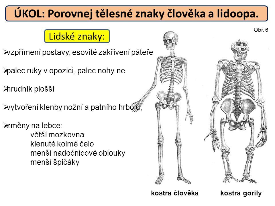 ÚKOL: Porovnej tělesné znaky člověka a lidoopa.