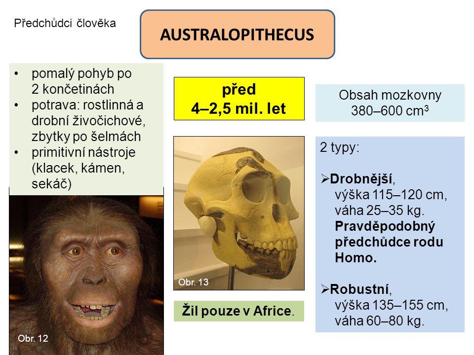 AUSTRALOPITHECUS před 4–2,5 mil. let pomalý pohyb po 2 končetinách