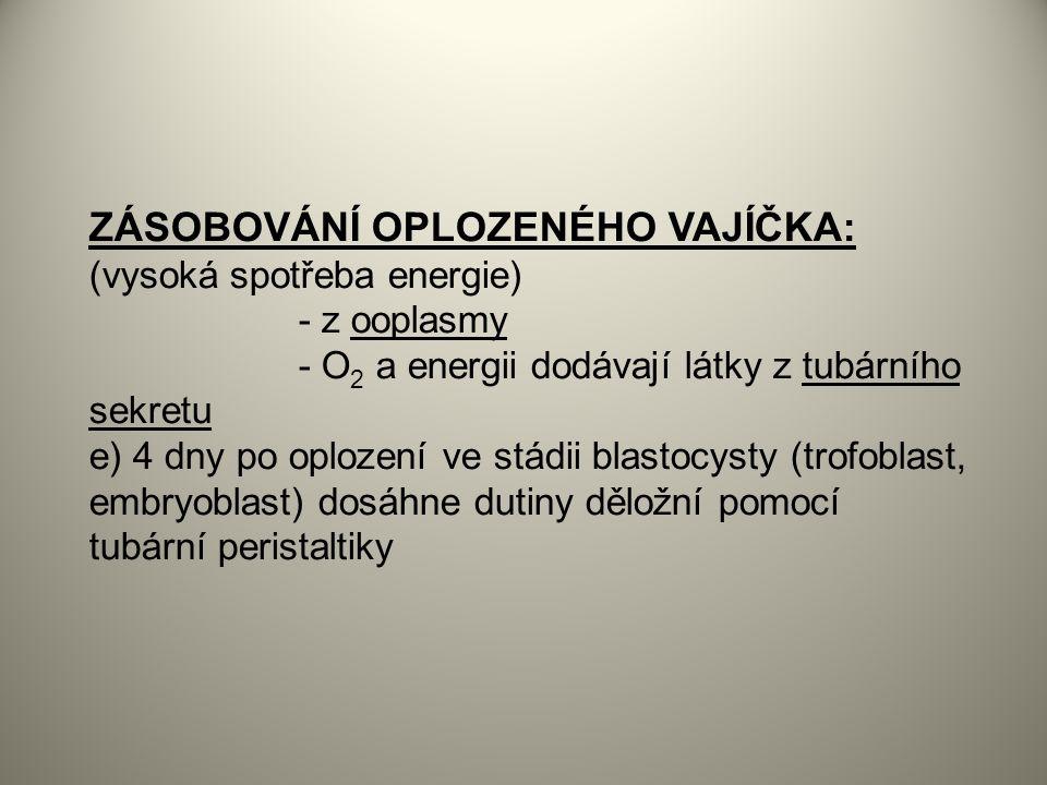 ZÁSOBOVÁNÍ OPLOZENÉHO VAJÍČKA: (vysoká spotřeba energie)