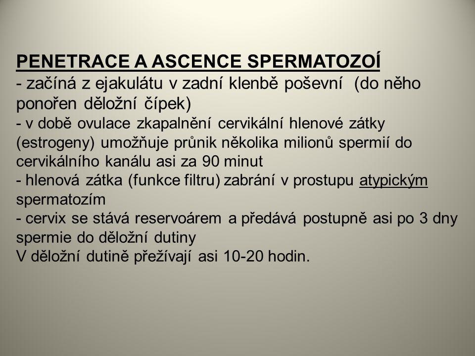 PENETRACE A ASCENCE SPERMATOZOÍ