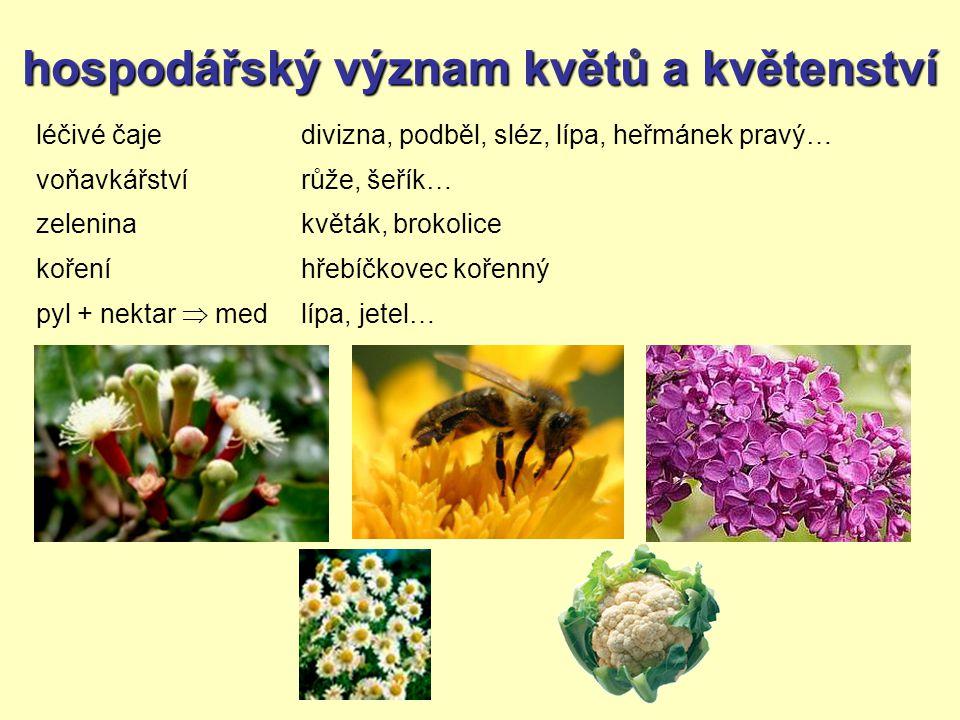 hospodářský význam květů a květenství