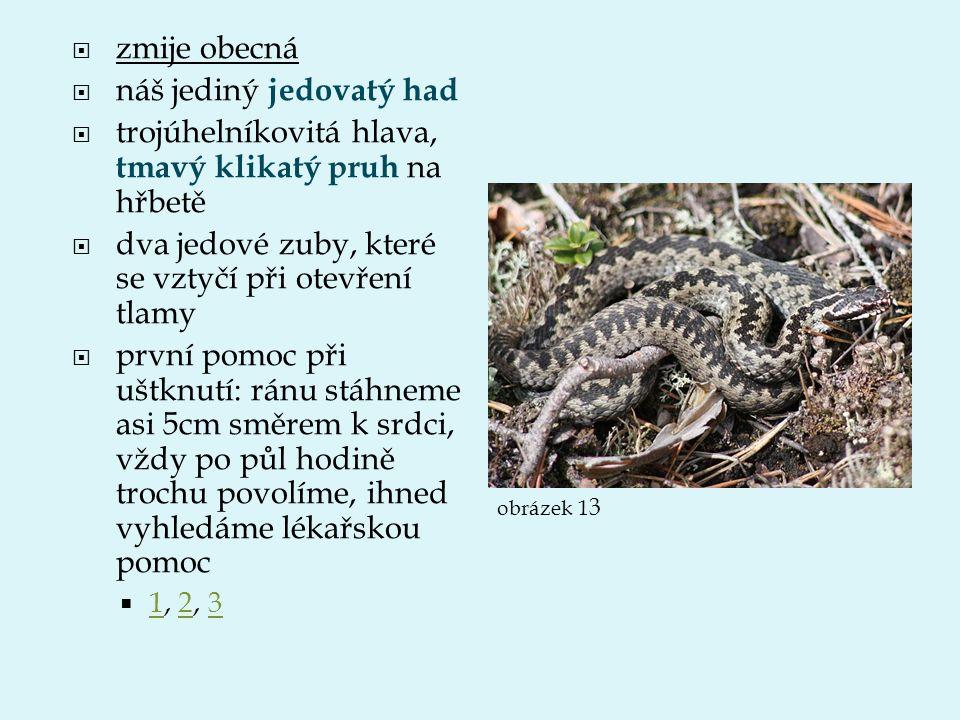 náš jediný jedovatý had