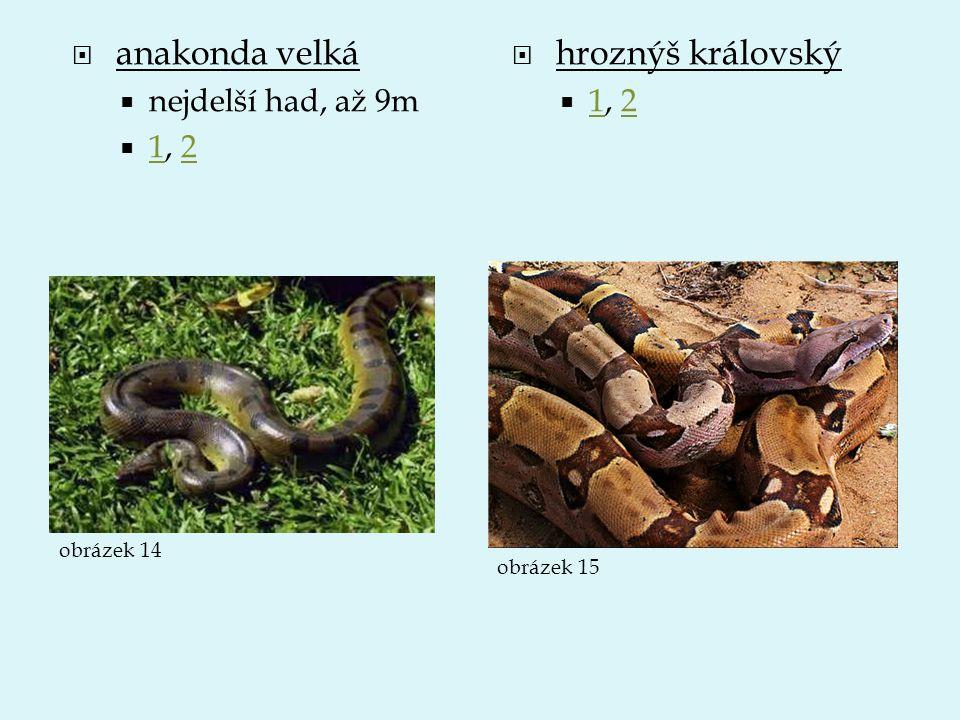 anakonda velká hroznýš královský nejdelší had, až 9m 1, 2 1, 2