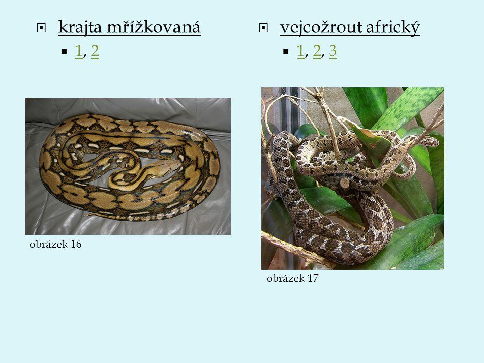 krajta mřížkovaná vejcožrout africký 1, 2 1, 2, 3 obrázek 16