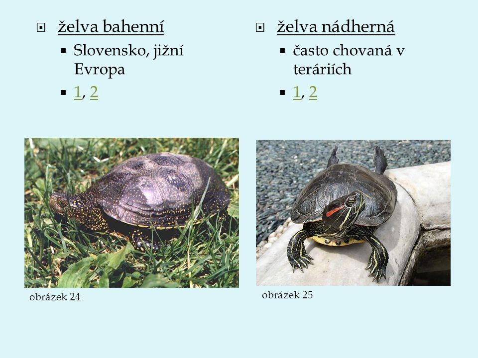 želva bahenní želva nádherná Slovensko, jižní Evropa 1, 2