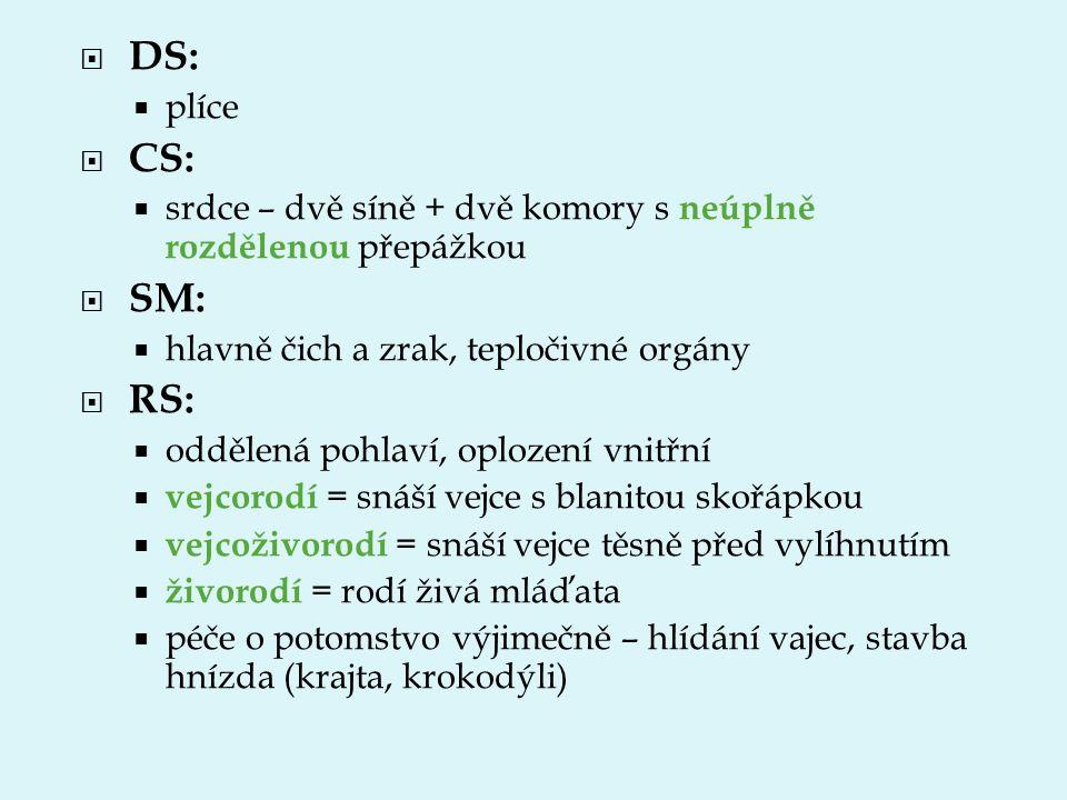 DS: plíce. CS: srdce – dvě síně + dvě komory s neúplně rozdělenou přepážkou. SM: hlavně čich a zrak, tepločivné orgány.