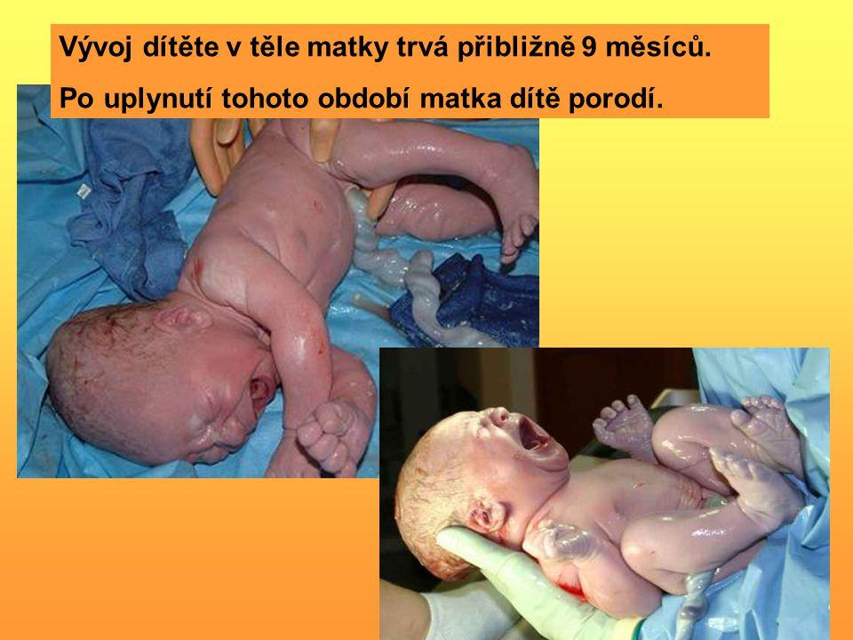 Vývoj dítěte v těle matky trvá přibližně 9 měsíců.