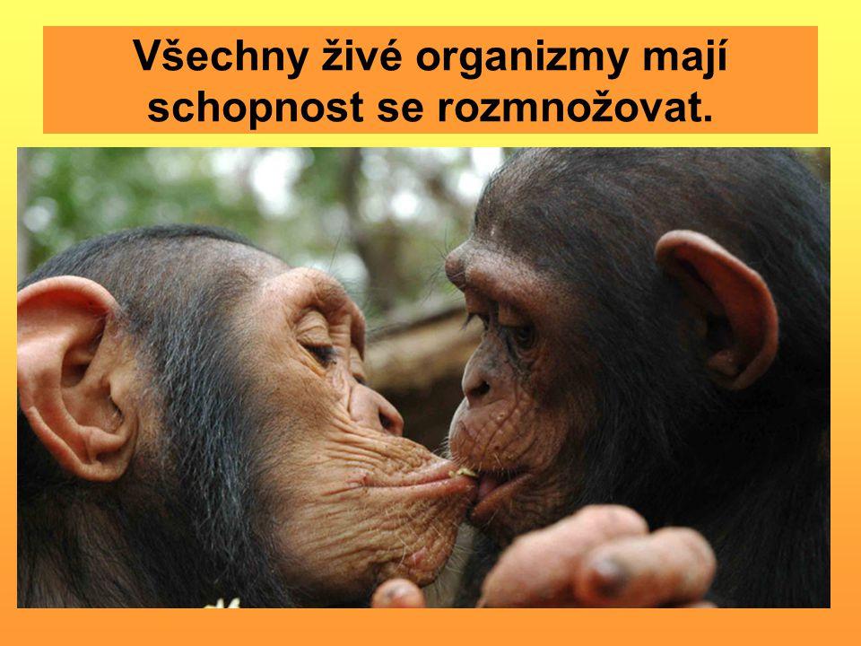 Všechny živé organizmy mají schopnost se rozmnožovat.