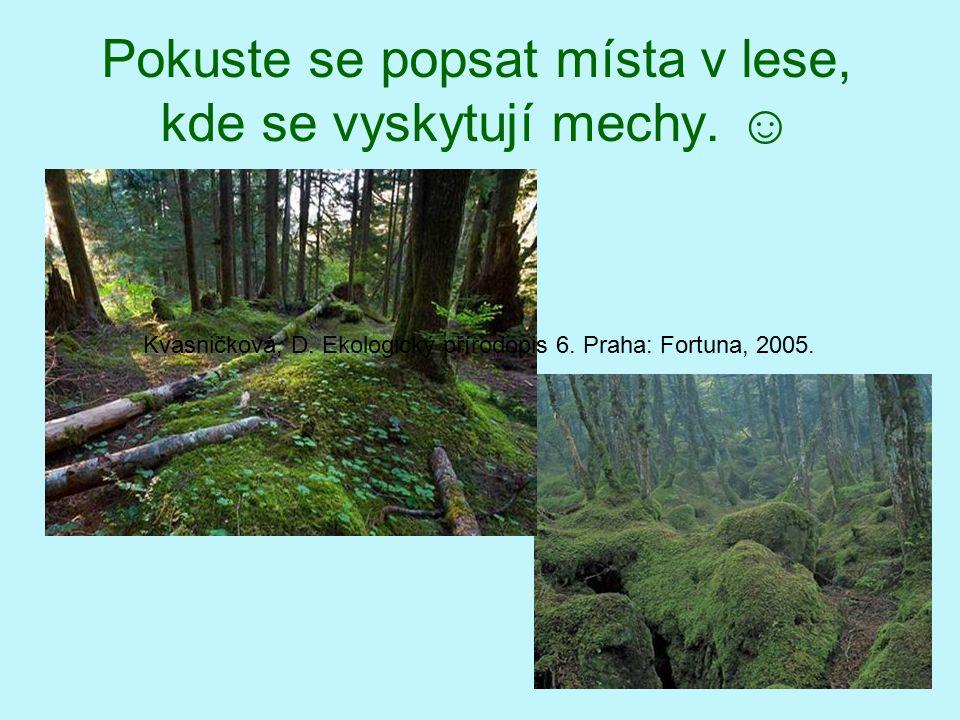 Pokuste se popsat místa v lese, kde se vyskytují mechy. ☺