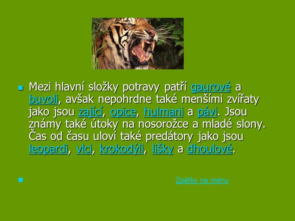 Mezi hlavní složky potravy patří gaurové a buvoli, avšak nepohrdne také menšími zvířaty jako jsou zající, opice, hulmani a pávi. Jsou známy také útoky na nosorožce a mladé slony. Čas od času uloví také predátory jako jsou leopardi, vlci, krokodýli, lišky a dhoulové.