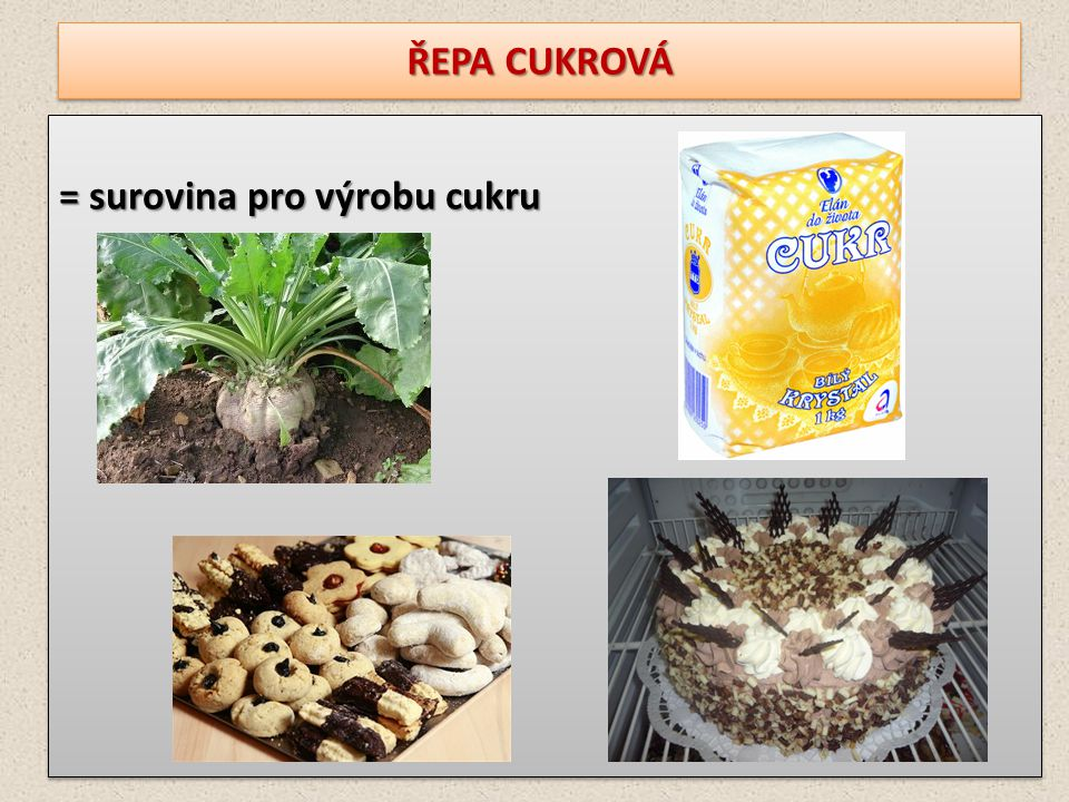 ŘEPA CUKROVÁ = surovina pro výrobu cukru