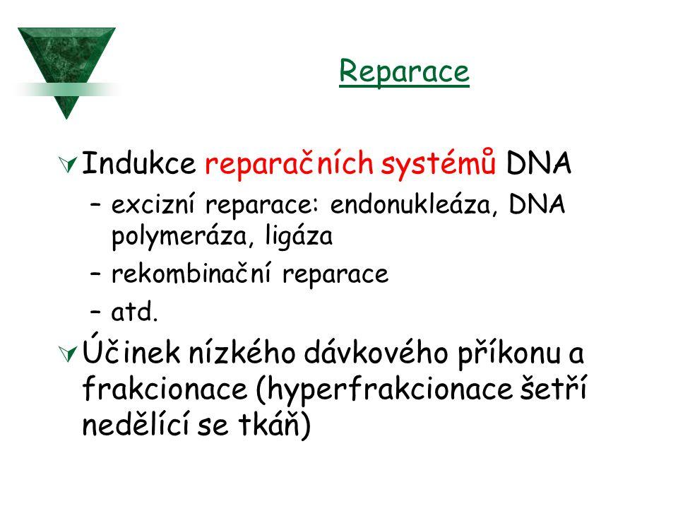 Indukce reparačních systémů DNA