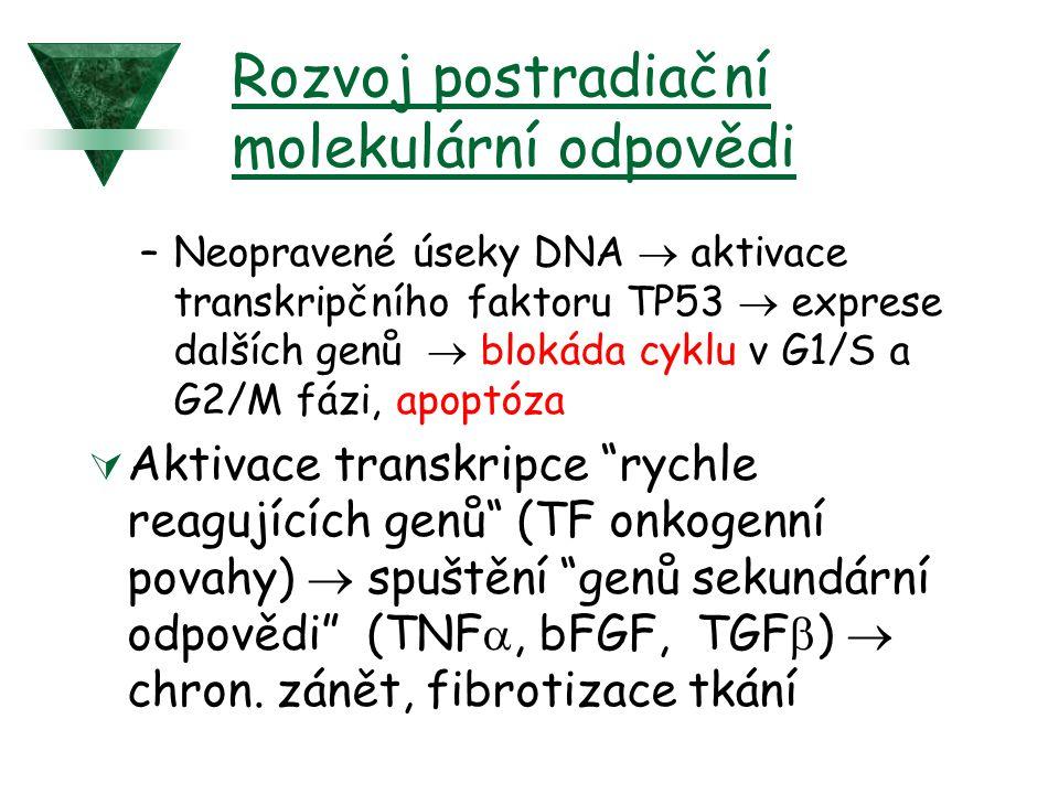 Rozvoj postradiační molekulární odpovědi