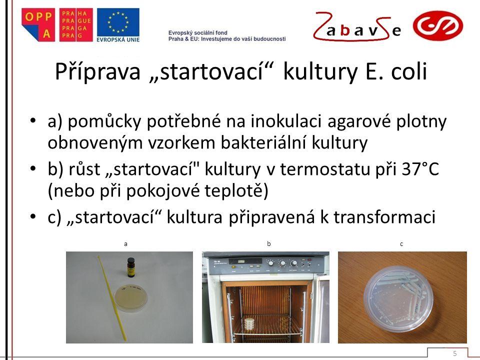 """Příprava """"startovací kultury E. coli"""