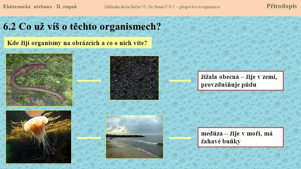 6.2 Co už víš o těchto organismech