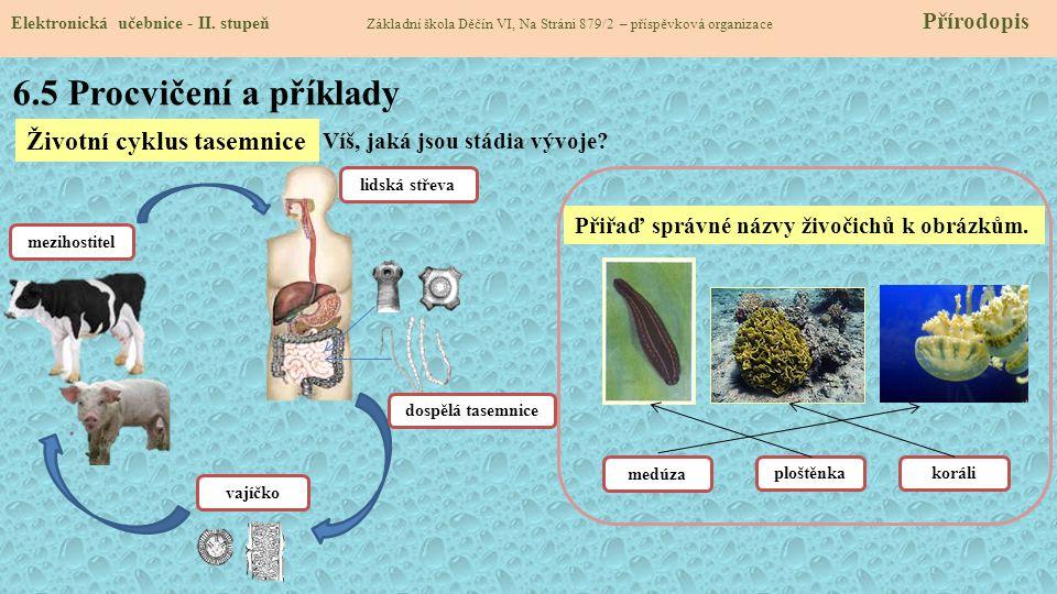 6.5 Procvičení a příklady Životní cyklus tasemnice