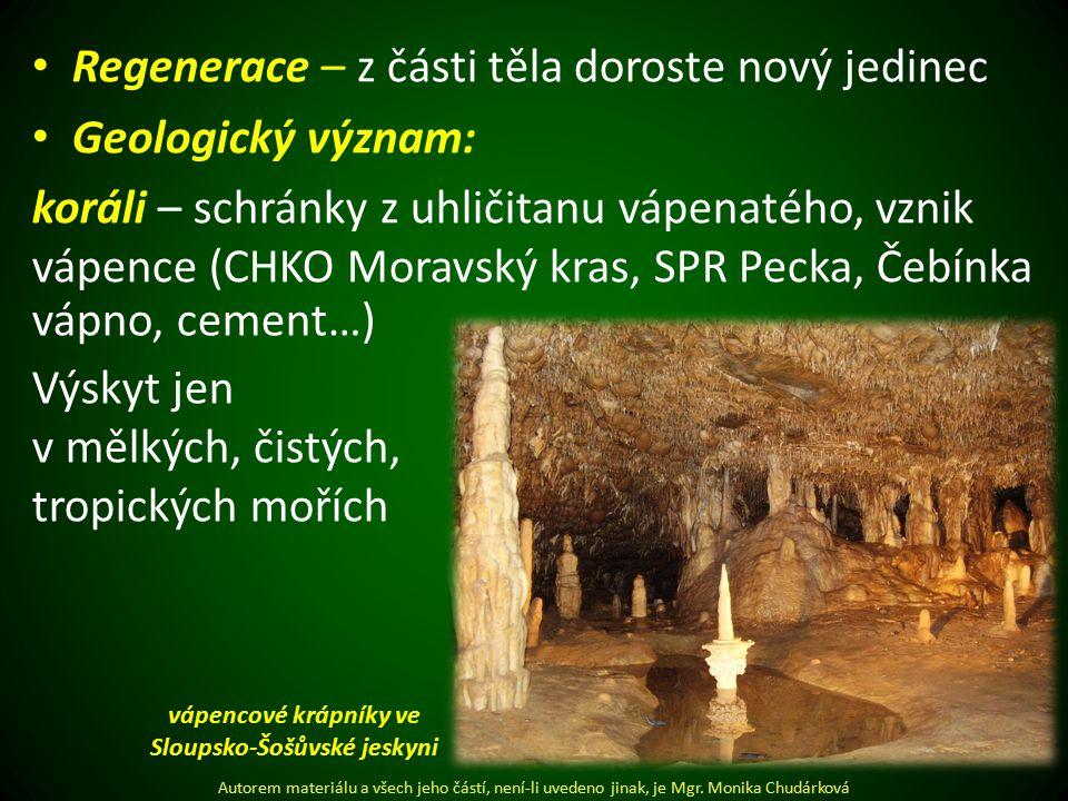 vápencové krápníky ve Sloupsko-Šošůvské jeskyni