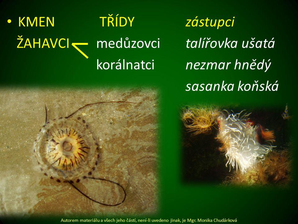 Žahavci medůzovci talířovka ušatá korálnatci nezmar hnědý