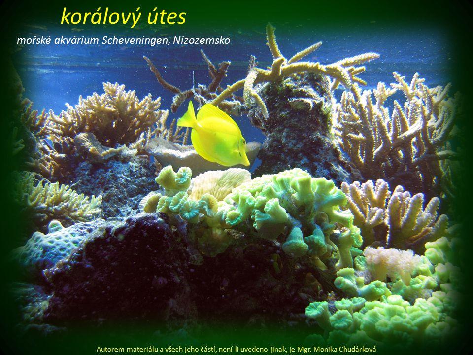 mořské akvárium Scheveningen, Nizozemsko