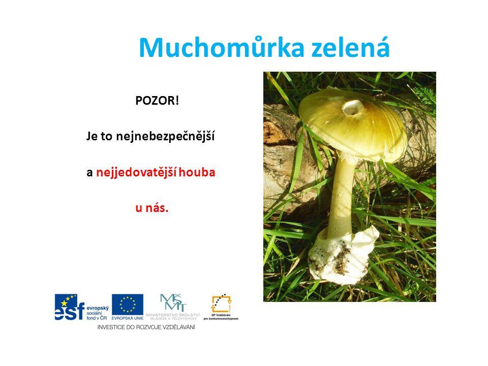 Muchomůrka zelená POZOR! Je to nejnebezpečnější a nejjedovatější houba u nás.