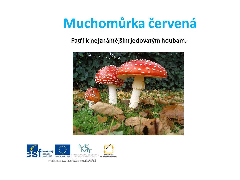 Patří k nejznámějším jedovatým houbám.