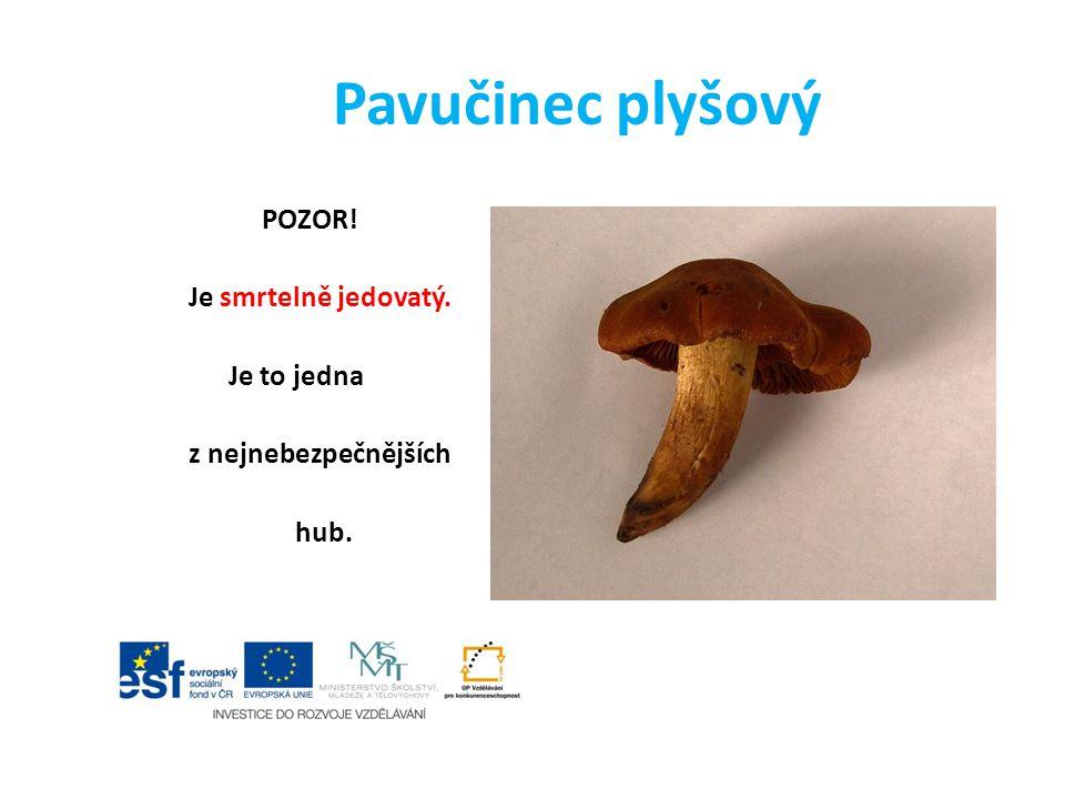 Pavučinec plyšový POZOR! Je smrtelně jedovatý. Je to jedna z nejnebezpečnějších hub.