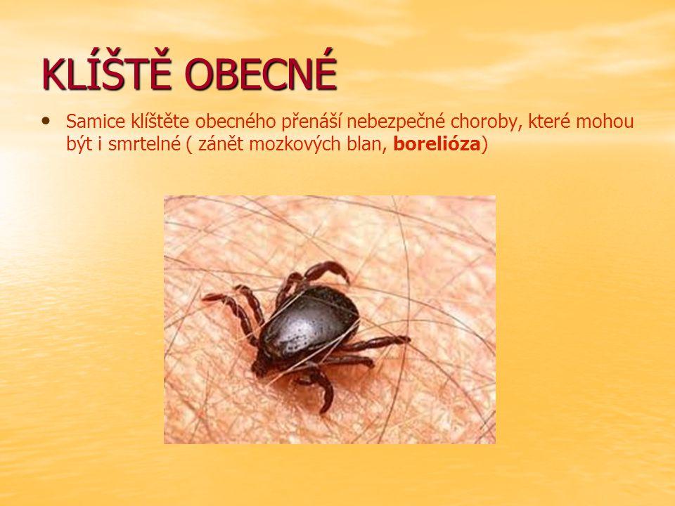 KLÍŠTĚ OBECNÉ Samice klíštěte obecného přenáší nebezpečné choroby, které mohou být i smrtelné ( zánět mozkových blan, borelióza)