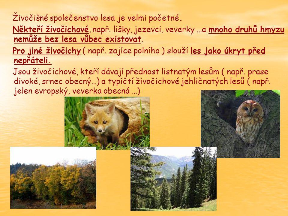 Živočišné společenstvo lesa je velmi početné.