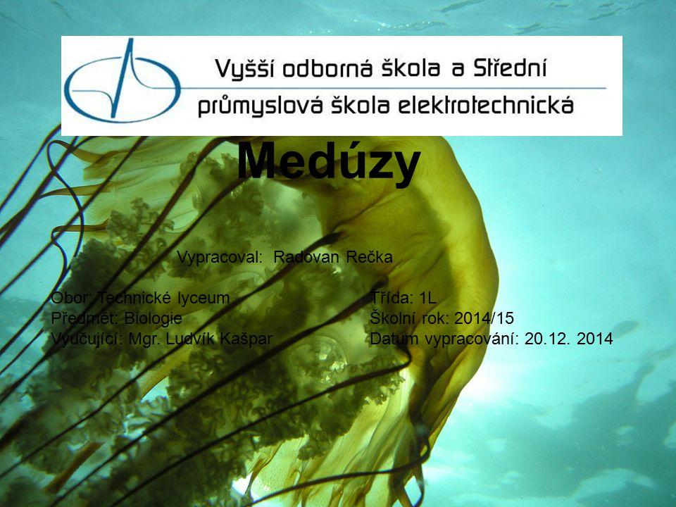 Medúzy Vypracoval: Radovan Rečka Obor: Technické lyceum Třída: 1L
