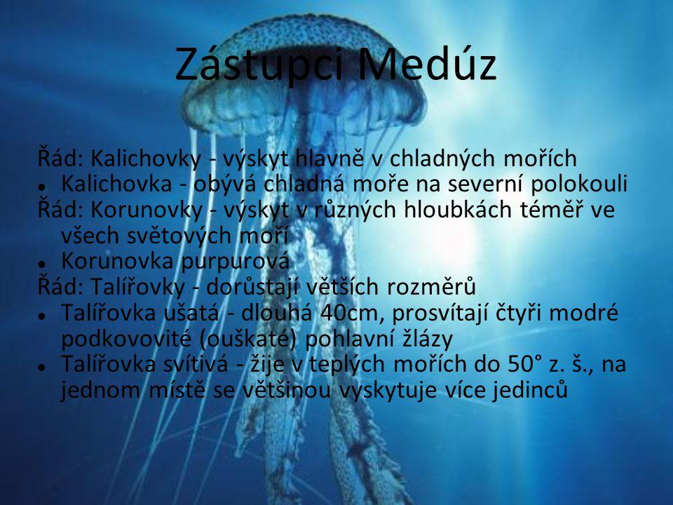 Zástupci Medúz Řád: Kalichovky - výskyt hlavně v chladných mořích