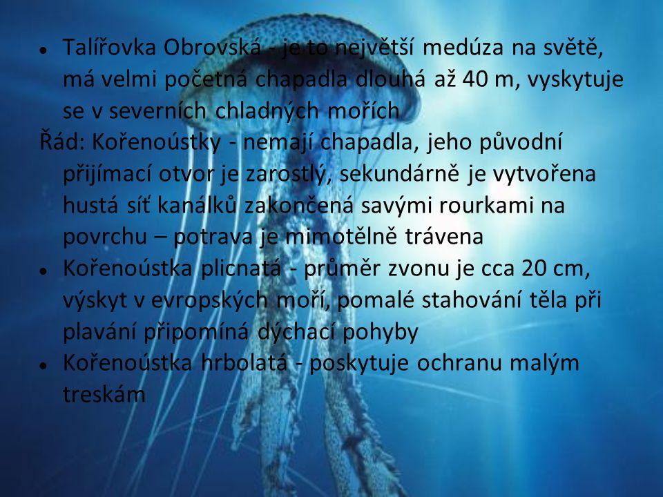 Talířovka Obrovská - je to největší medúza na světě, má velmi početná chapadla dlouhá až 40 m, vyskytuje se v severních chladných mořích