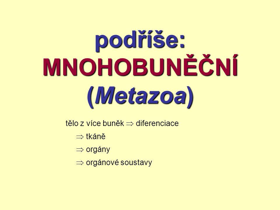 podříše: MNOHOBUNĚČNÍ (Metazoa)