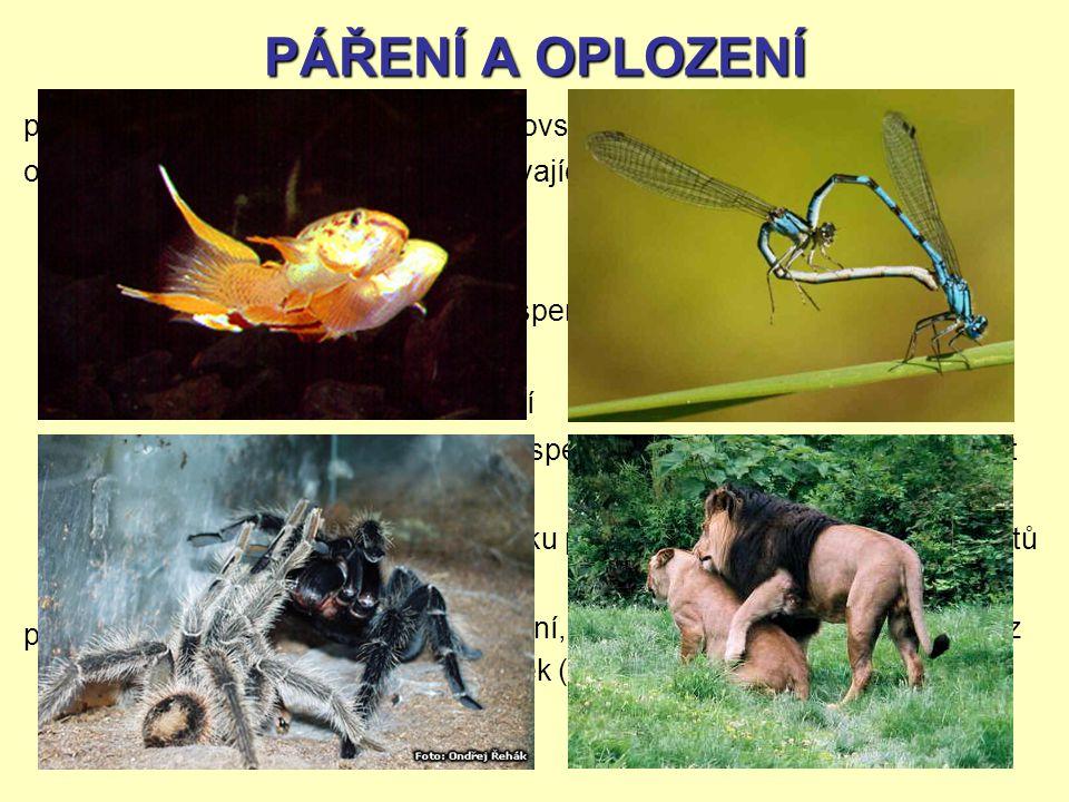 PÁŘENÍ A OPLOZENÍ páření oplození vnější vnitřní partenogeneze