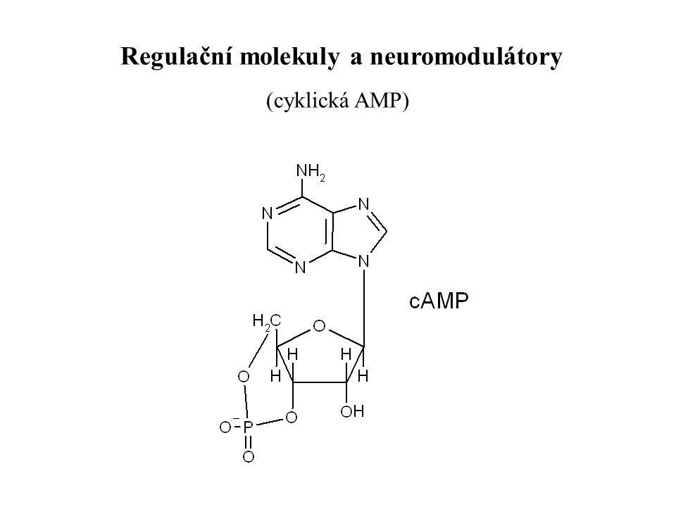 Regulační molekuly a neuromodulátory