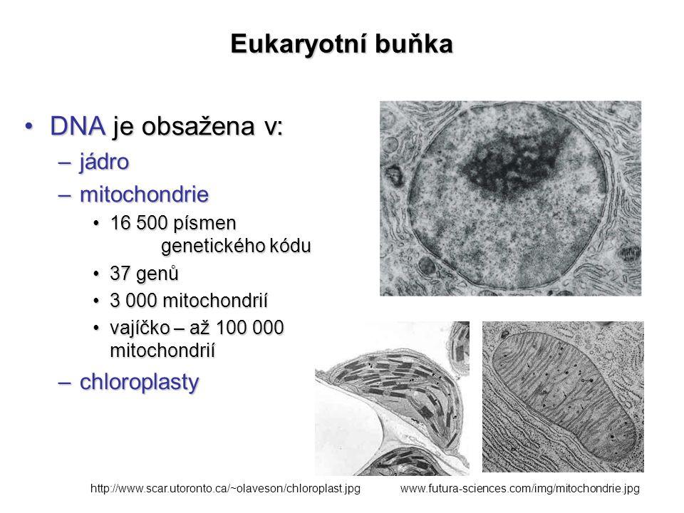 Eukaryotní buňka DNA je obsažena v: jádro mitochondrie chloroplasty