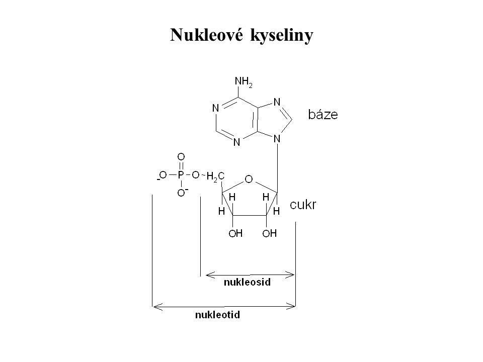 Nukleové kyseliny