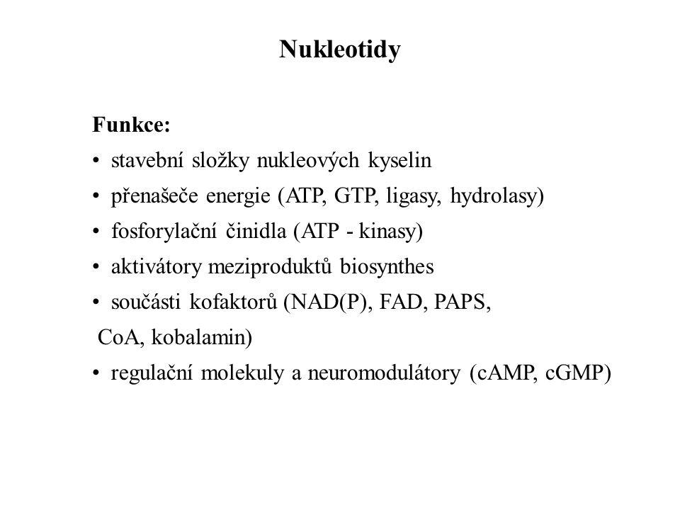 Nukleotidy Funkce: stavební složky nukleových kyselin