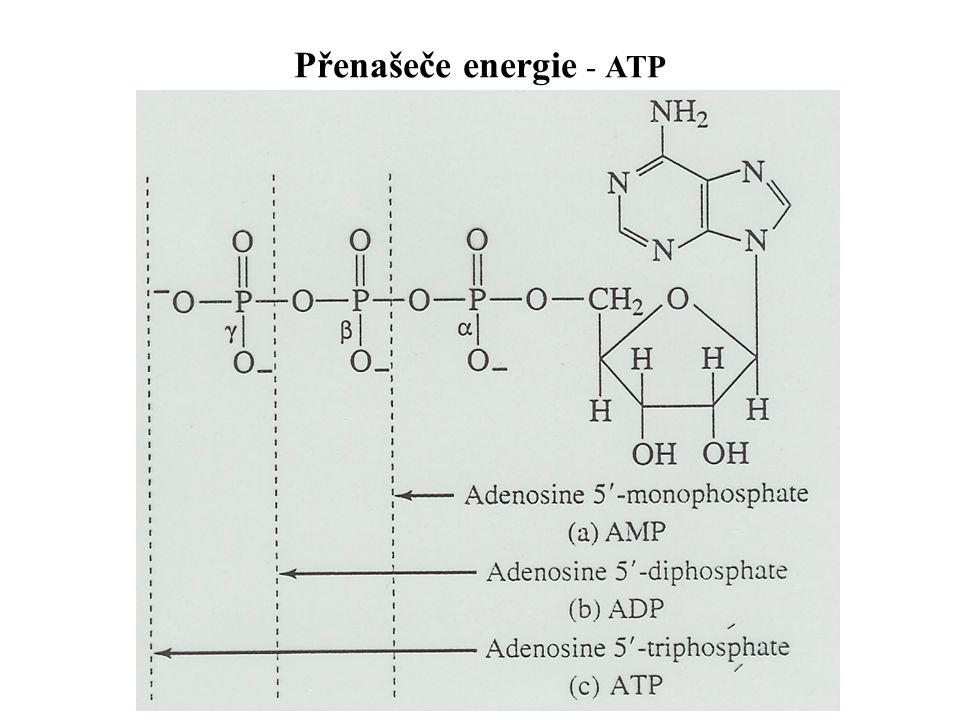 Přenašeče energie - ATP