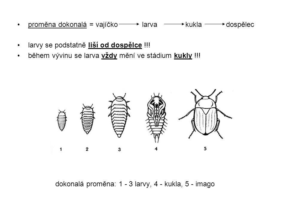 proměna dokonalá = vajíčko larva kukla dospělec